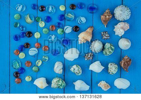 shell seashell mollusk set collection sea travel