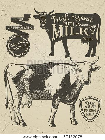 Cow in graphic vintage style hand drawing vector image.