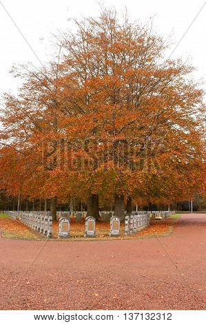 Belgian Military Cemetery Houthulst - Tree