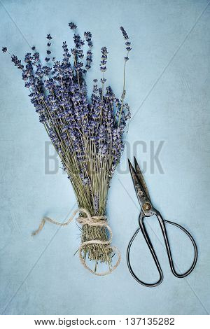 Overhead view of a bundle of dried lavender flowers with an old pair of antique scissors.