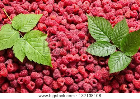 natural background with raspberry and two green leaves