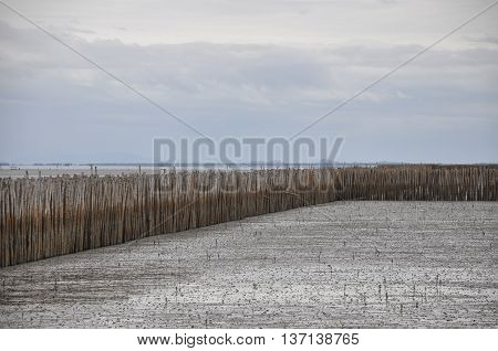 A straight fence of bamboo in the sea on an overcast day