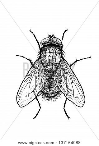 It is a fly, what made by ink, then it was digitalized.