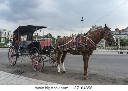 Horse Carriage In Havana, Cuba