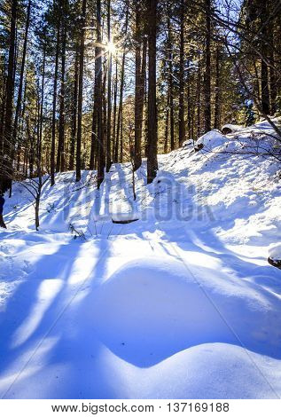 West Fork Trail in Oak Creek Canyon near Sedona, Arizona after snow storm