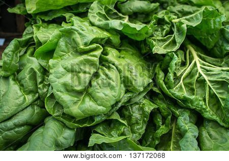Bunch of spinach leaves in farmers market close up image