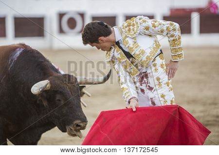 Linares SPAIN - August 29 2014: The Spanish Bullfighter Daniel Luque bullfighting with the crutch in the Bullring of Linares Spain