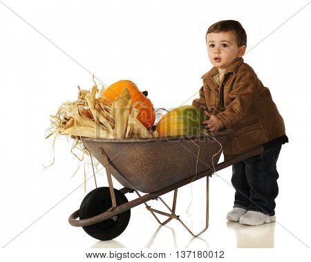An adorable baby boy claiming his pumpkin that's in a wheelbarrow with other harvest goods.  Isolated on white.
