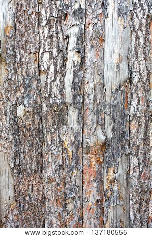 Natural tree bark plank texture. Untreated rustic wood background, rough timber plant surface. Weathered grunge styled fence. Vertical image