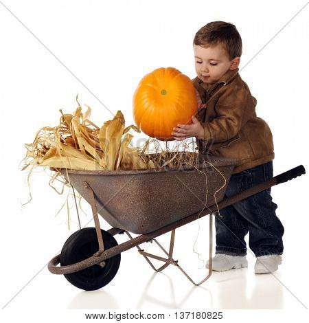 An adorable baby boy putting his pumpkin into a wheelbarrow.  Isolated on white.