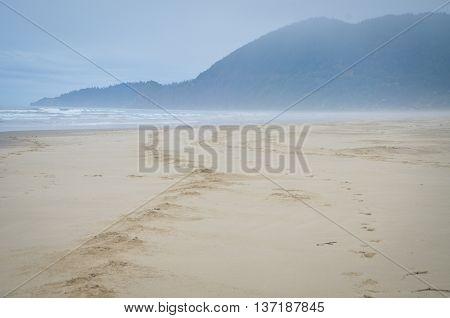 Horse tracks along the pacific ocean in Nehalem Bay Oregon