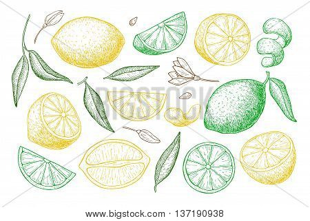 Vector hand drawn lemon set. Whole lemon sliced pieces half leafe and seed sketch. Tropical summer fruit engraved style illustration. Detailed citrus drawing.