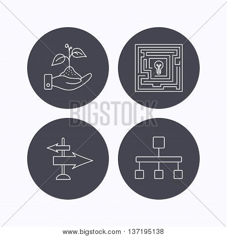 Hierarchy, save nature and direction arrow icons. Maze linear sign. Flat icons in circle buttons on white background. Vector