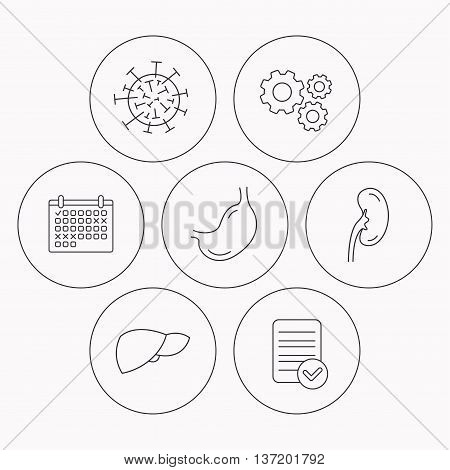 Virus, stomach and kidney icons. Liver linear sign. Check file, calendar and cogwheel icons. Vector