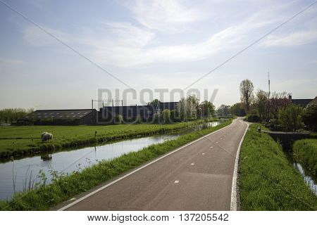 Cycle Path and Canal through a Dutch Polder Landscape in Maasland the Netherlands with a Farm and grazing Sheeps in a Meadow