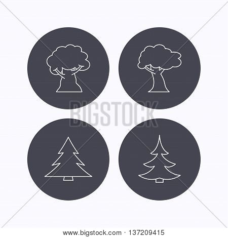 Tree, oak-tree and christmas tree icons. Forest trees linear signs. Flat icons in circle buttons on white background. Vector