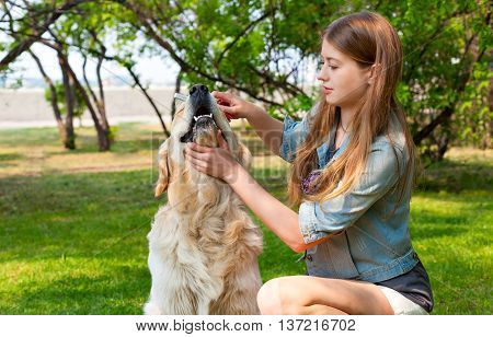 Human friendship and dogs. Hygienic procedures. The content of Labrador. A young girl cares for dog fur outdoors. The owner of a pure breed dog fur golden retriever.