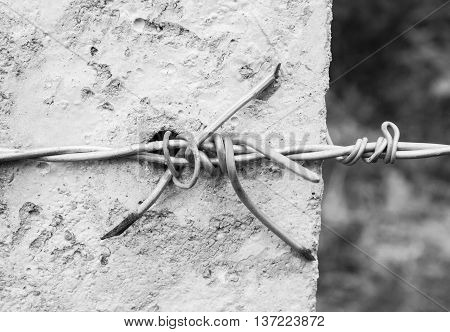 background fence is barbed wire at home out of danger in black and white