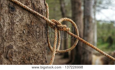 Rope tightened around tree trunk in front of blurred natural background. Rope with knot around brown tree.