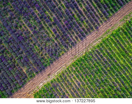 Aerial view of a landscape with lavender field