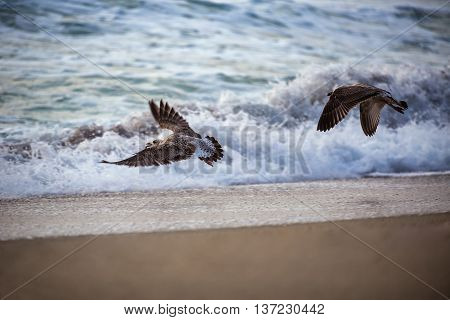Flying seagull over the blue sea and sunrise