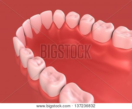 3D Illustration Of Lower Gum And Teeth.