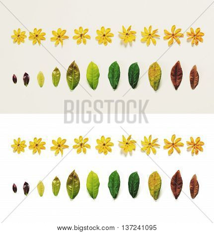 Leaves and flowers on white background, aging process concepts, on white and grey background