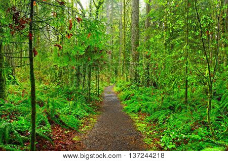 a picture of an exterior Pacific Northwest forest hiking trail in  winter