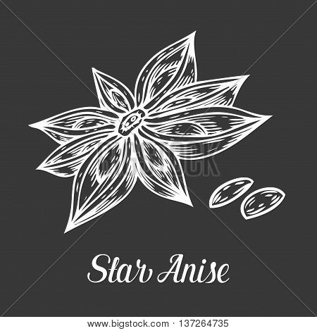 Anise Star Flower Seed Plant . Hand Drawn Sketch Vector Illustration Isolated On Black. Spicy Herbs.