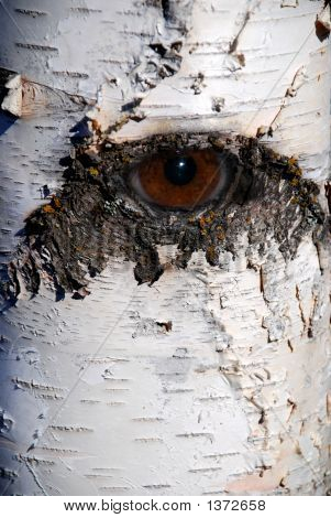 Willow Eye