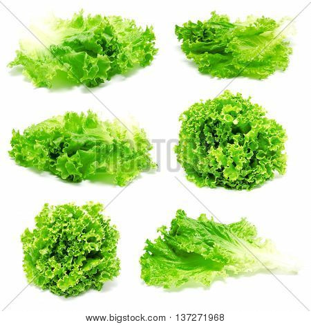 Collection of photos fresh lettuce leaves isolated on a white background