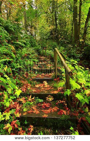 a picture of an exterior Pacific Northwest forest hiking trail staircase in fall