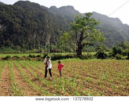 LAO CAI, VIETNAM, February 10, 2016 farmer families Hmong, Lao Cai highland, Vietnam, maize