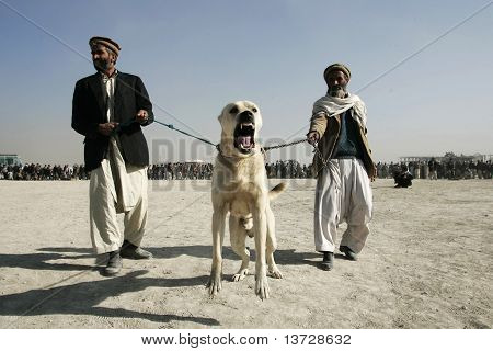 dog fighting in Afghanistan