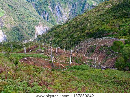 Gardens In The Mountains At Island New Guinea