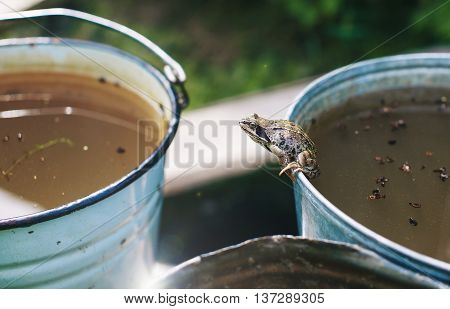 frog optimist. overcome difficulties. frog sitting on the edge of the bucket gathering strength for a new leap. the concept of optimism, desire to succeed, despite the stress and the difficulties of life