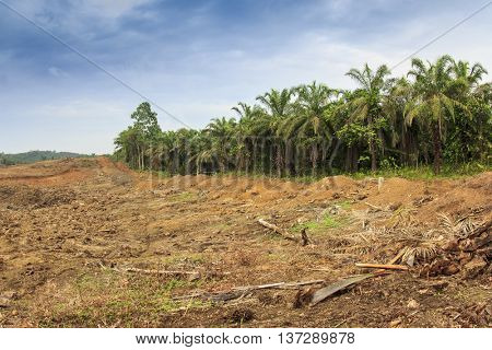 Deforestation of natural rain forest for oil palm plantations