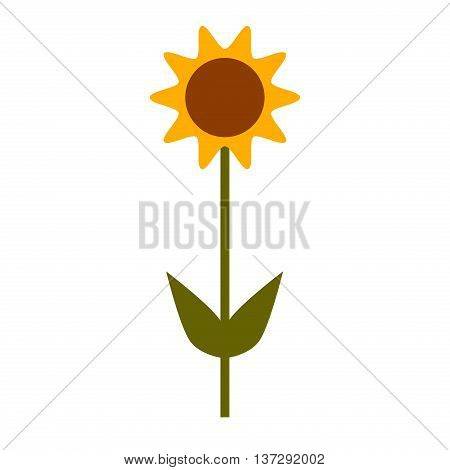 Sunflower isolated on white background. Natural sunflower summer yellow flower garden isolated plant. Yellow natural bright blossom leaf flora. Agriculture green orange botany floral sun vector.
