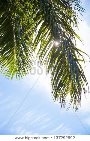 Tropical Palm Trees Jungle Nature Landscape Background Holiday Travel Design View. Blue sky. Palm tree.
