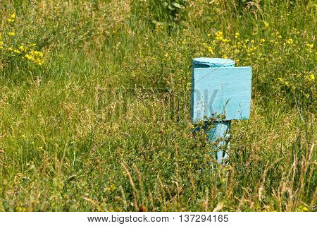 Plate (nameplate) of steel painted light blue. No inscription (blank). Around the green grass and colorful flowers.