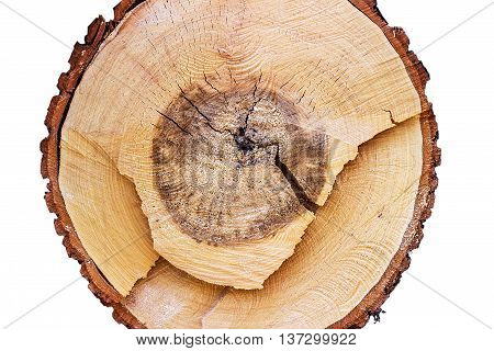 Close-up of a cross section of a tree stump showing aging circles, on white background