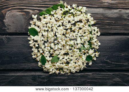White Acacia Blossoming Flower Petals
