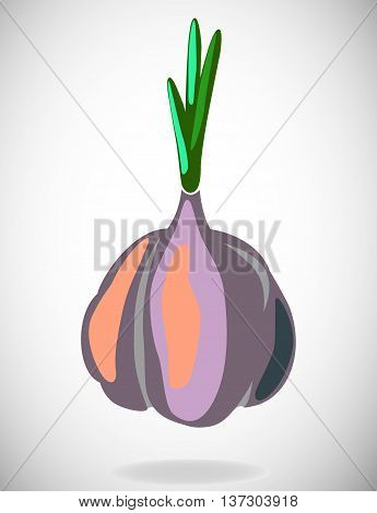 Flat illustration with shadow of garlic. Vector background