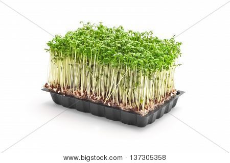cress sprouts isolated on white background closeup