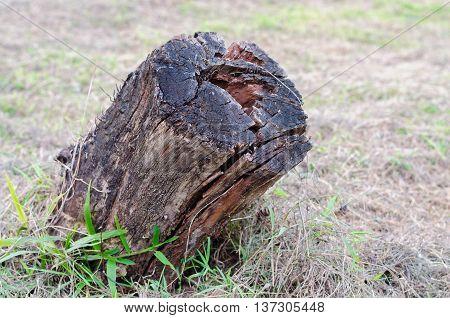 Old wooden stump in forest ,wooden stump in garden