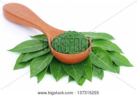 Ayurvedic henna leaves with paste over white background