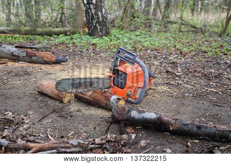 Chainsaw lying on the ground near the dry sawn tree in the forest