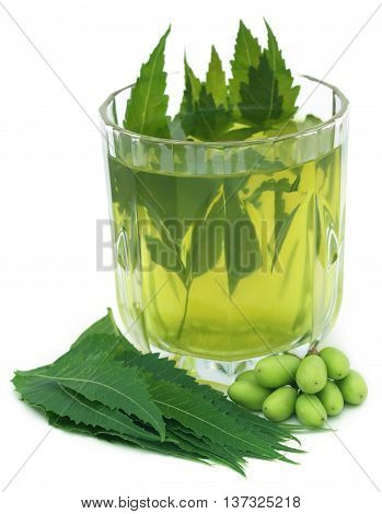 Medicinal neem extract with fruits and leaves over white background