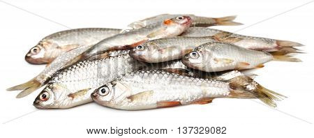Swamp Barb of Indian subcontinent over white background
