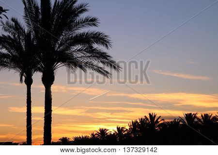 The picture was taken in Spain Salou. The picture shows the night sky where visible condensation trail from aircraft engines. In the foreground silhouettes of palm trees.